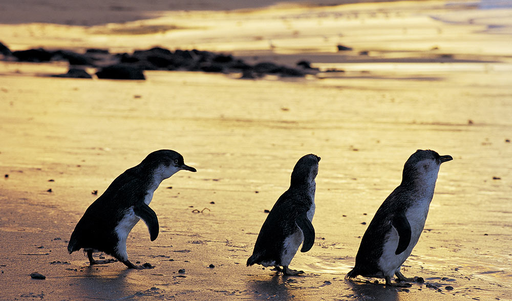 PrinceHotel-Landscape-WhatsOn-PENGUINS-Working