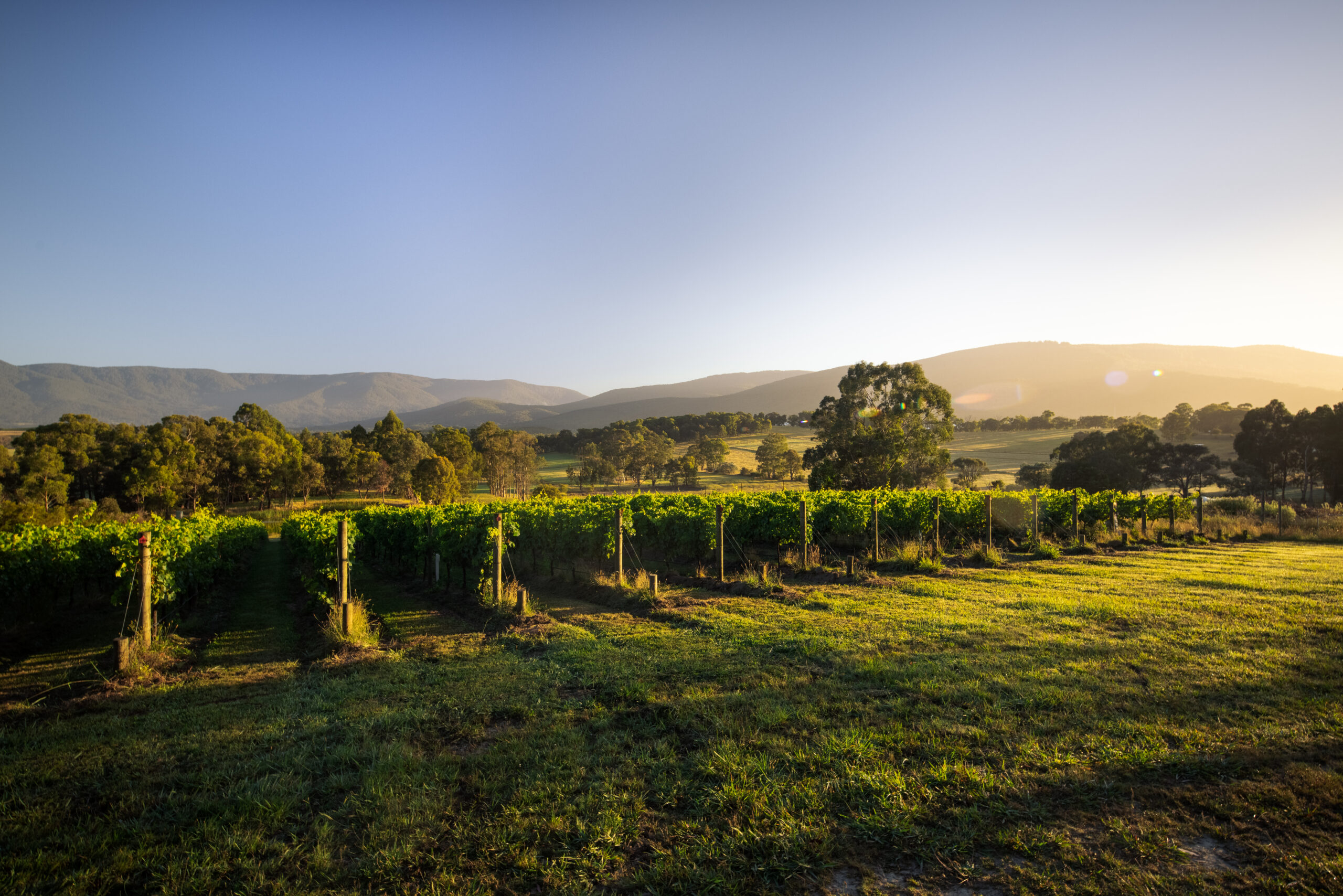 Mac Forbes Winery Yarra Valley